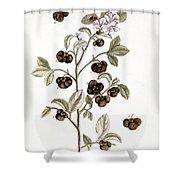 Peco Tea, 1735 Shower Curtain