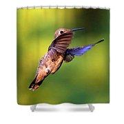 Peek-a-boo Hummingbird Shower Curtain