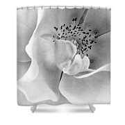 Peek-a-boo In Black And White Shower Curtain