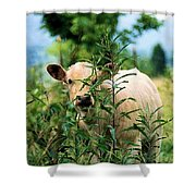 Peek A Boo Shower Curtain by Jan Amiss Photography