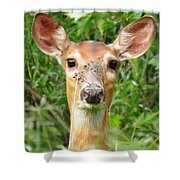 Peek A Boo  Shower Curtain by Lori Frisch