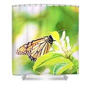 Peek-a-boo Shower Curtain