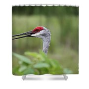 Peek-a-boo Sandhill Crane Shower Curtain