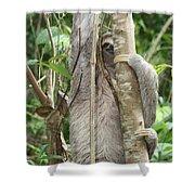 Peek-a-boo Sloth Shower Curtain
