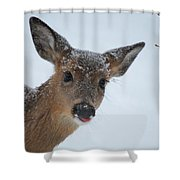 Peek A Doe Shower Curtain