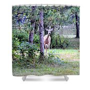 Peekaboo Deer Shower Curtain