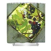 Peeking At Grapes Shower Curtain