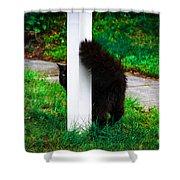 Peeking Kitty Shower Curtain