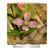 Peeking Throuigh Shower Curtain