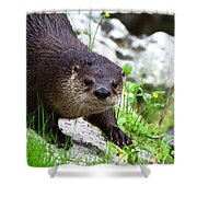 Peering Otter Shower Curtain