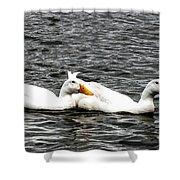 Pekin Ducks Shower Curtain
