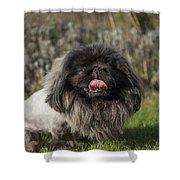 Pekingese Dog Shower Curtain