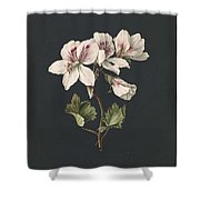 Pelargonium Album Bicolor, M De Gijselaar 1830 Shower Curtain