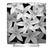 Pelargonium Graveolens Shower Curtain