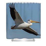 Pelican 2017-1 Shower Curtain
