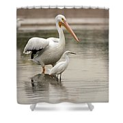 Pelican And Snowy Egret 6459-113017-1cr Shower Curtain