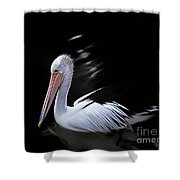 Pelican At Dusk Shower Curtain