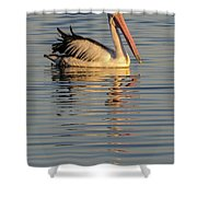 Pelican At Sunset 1 Shower Curtain