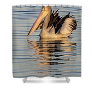 Pelican At Sunset 2 Shower Curtain