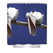 Pelican Burp Shower Curtain