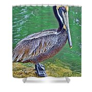 Pelican By The Pier Shower Curtain