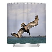 Pelican Diving For Dinner Shower Curtain