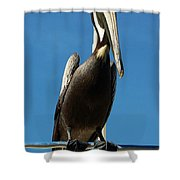 Pelican Dreams Shower Curtain