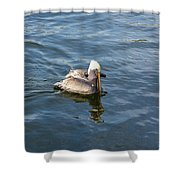 Pelican Eating Dinner Shower Curtain