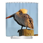 Pelican Feathers Shower Curtain