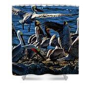 Pelican Fiesta Shower Curtain