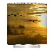 Pelican Flight Into The Clouds Shower Curtain