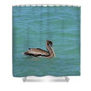 Pelican Floating In The Tropical Waters In Aruba Shower Curtain