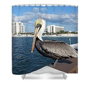 Pelican -florida Shower Curtain