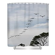 Pelican Formation Shower Curtain