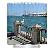Pelican Gazing At Port Canaveral In Florida Shower Curtain