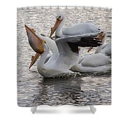 Pelican Having Supper Shower Curtain
