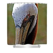 Pelican Head Shower Curtain