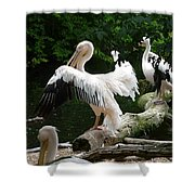 Pelican Hideaway Shower Curtain