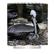 Pelican Hug Shower Curtain