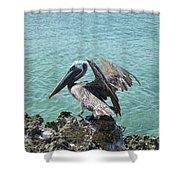 Pelican In Aruba Landing On Lava Rock Shower Curtain