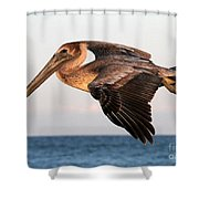 Pelican In Flight At Sunset Shower Curtain