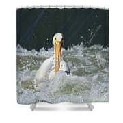 Pelican In Rough Water Shower Curtain