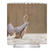 Pelican In The Water  Shower Curtain