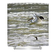 Pelican Landing And Cormorants Shower Curtain