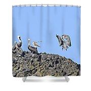 Pelican Landing On A Rock Shower Curtain