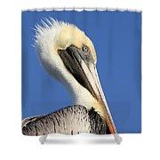 Pelican Mohawk Shower Curtain
