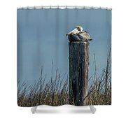 Pelican On A Piling Shower Curtain