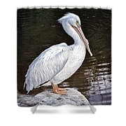 Pelican On Black Shower Curtain
