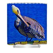 Pelican On Dock Looking Down Shower Curtain