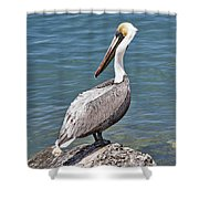 Pelican On Rock Shower Curtain